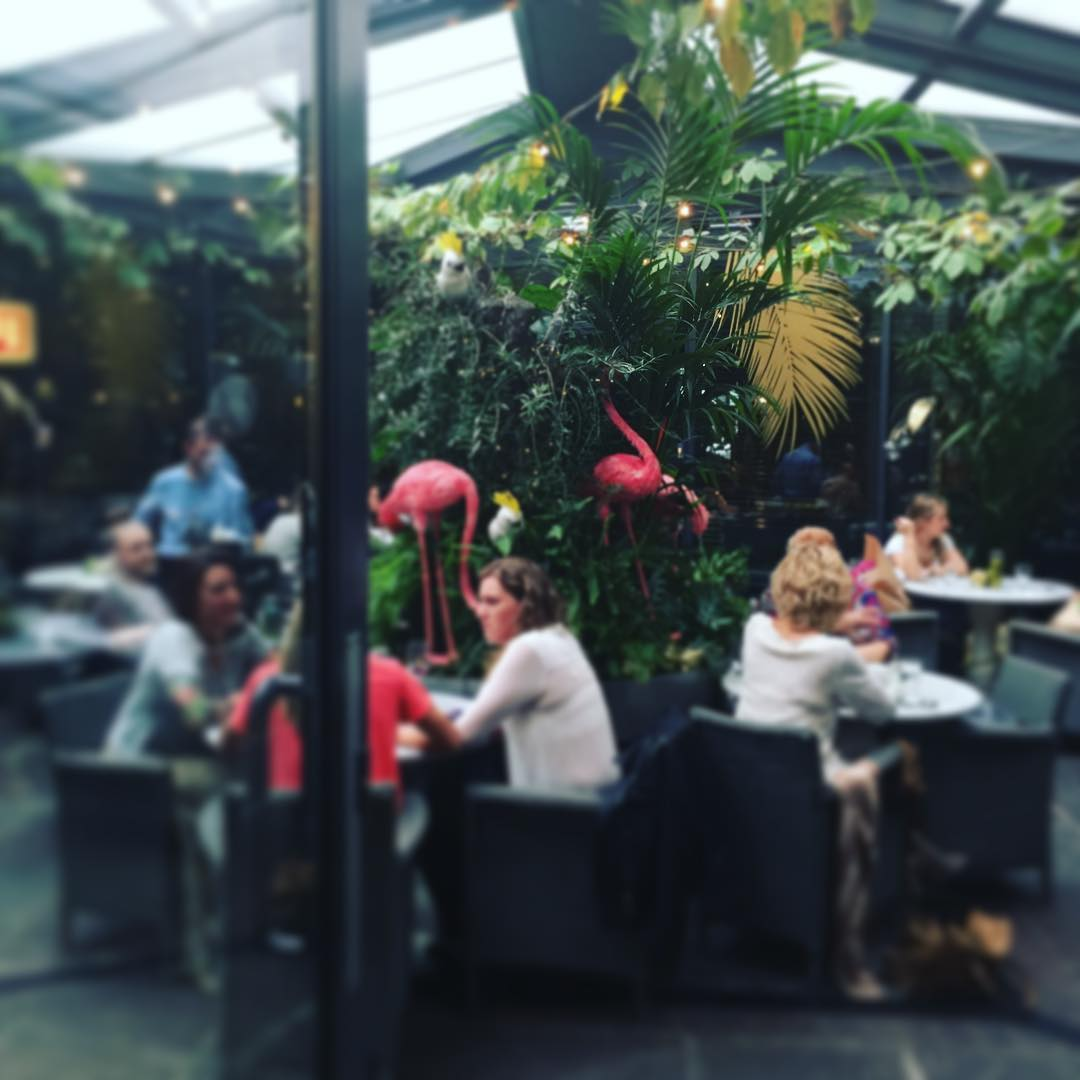 following another garden...tropical paradise @thehoxtonhotel #pinkflamingos #garden #London #ldf16